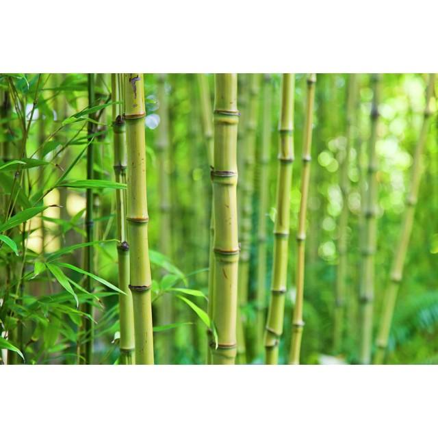 Masca reconstructoare Bamboo & Oils Hair Genic 300 ml