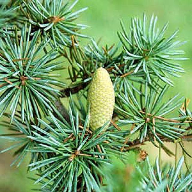 Sampon volum pentru toate tipurile de par White Cedar, Copenhagen 400 ml - Natura Siberica